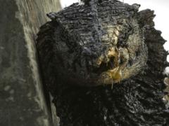 Инопланетные рептилии уничтожают этот мир — название фильма